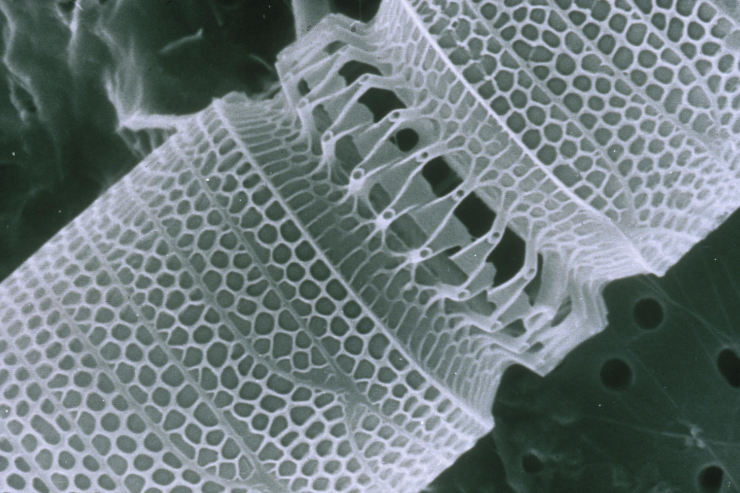 A+nanotube+used+in+medical+treatments